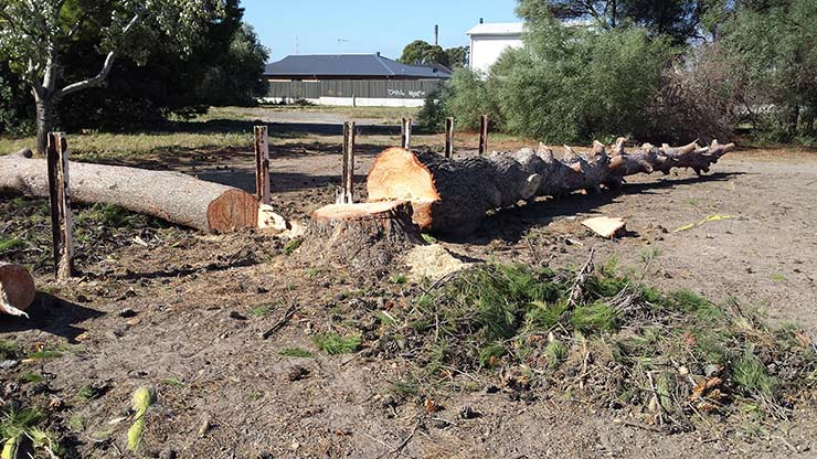 all tree and stump removal stump and tree