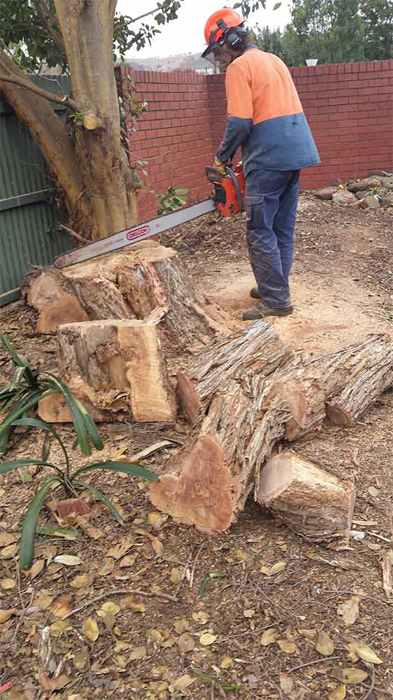 all tree and stump removal tree cutting in home