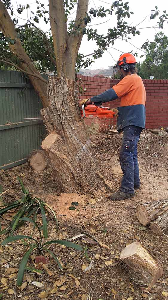 all tree and stump removal tree slicing