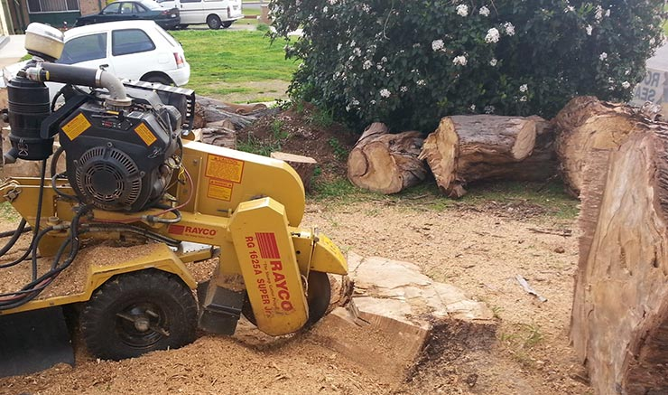 all tree and stump removal tree stump removing in home