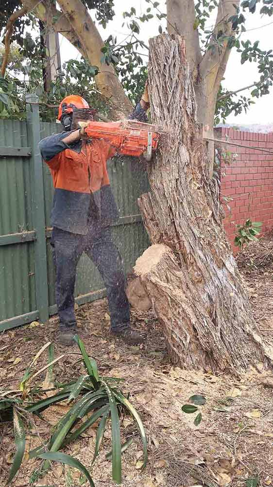 all tree and stump removal worker cutting tree
