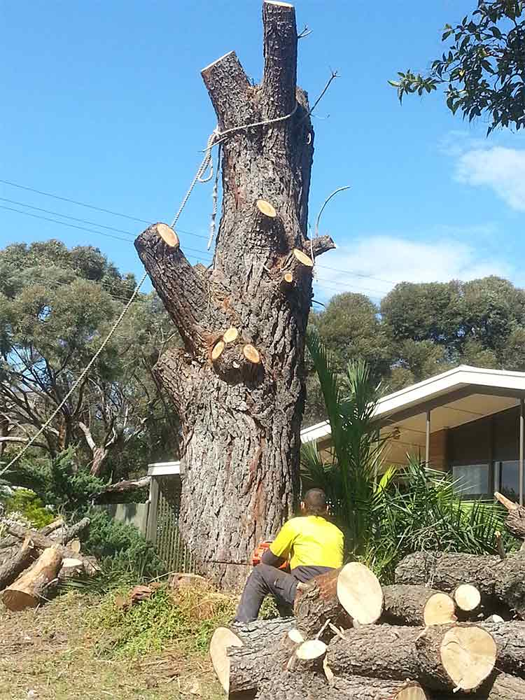 all tree and stump removal worker sitting in chopped tree
