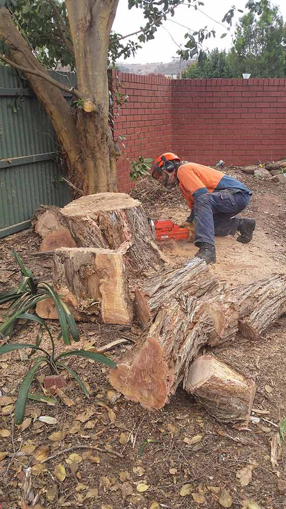 all tree and stump removal worker with chainsaw