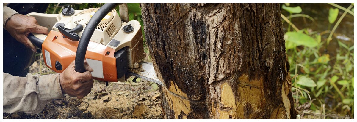 all tree and stump removal man with chainsaw cutting the tree