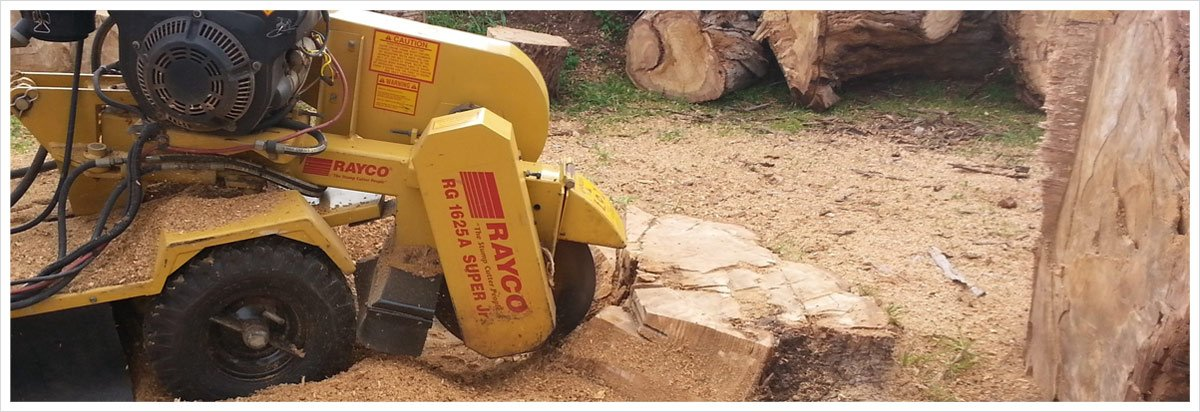 all tree and stump removal stump grinding
