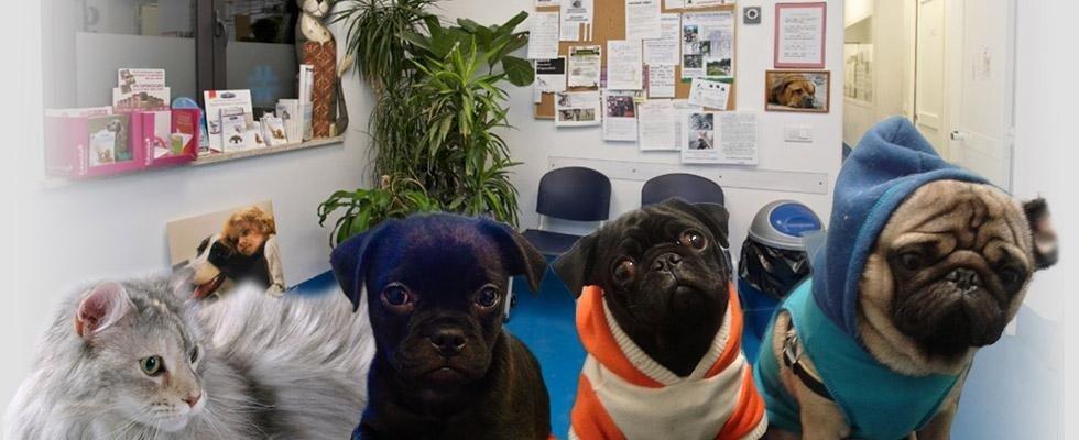 centro veterinario specializzato