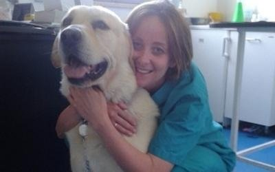 cane curato