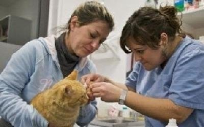 Visite specialistiche cani e gatti siena centro for Puntura processionaria