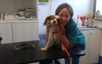 paziente veterinario
