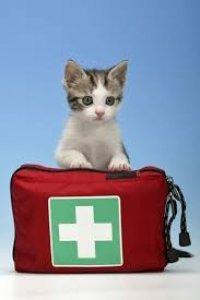 cucciolo di gatto dietro la valigetta del pronto soccorso