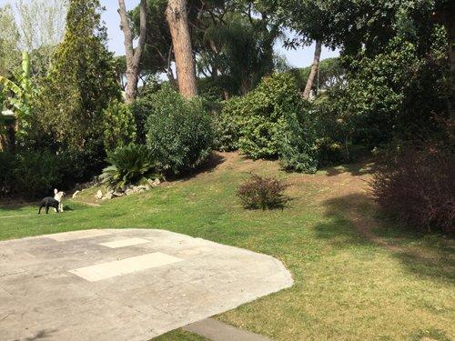 giardino con cani