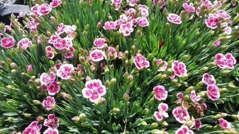 Fiori vivaio Garden