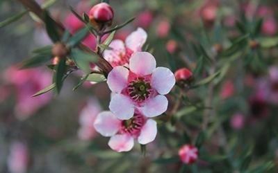 trattamenti per fiori
