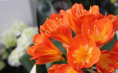 fiori in vaso Pisa