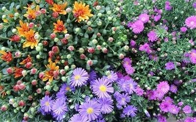 vendita fiori Pisa