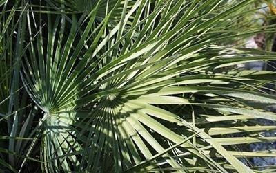 prodotti botanici