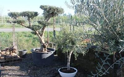 Vendita piante esemplari
