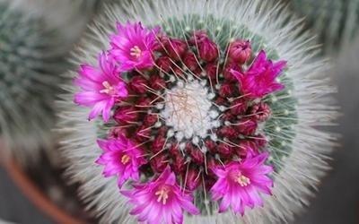 vendita cactus