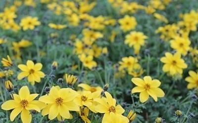 fiori per composizioni