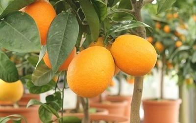 prodotti per giardinaggio