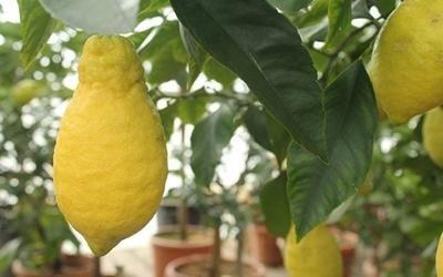 vendita arance