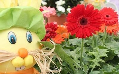fiori stagionali Pisa