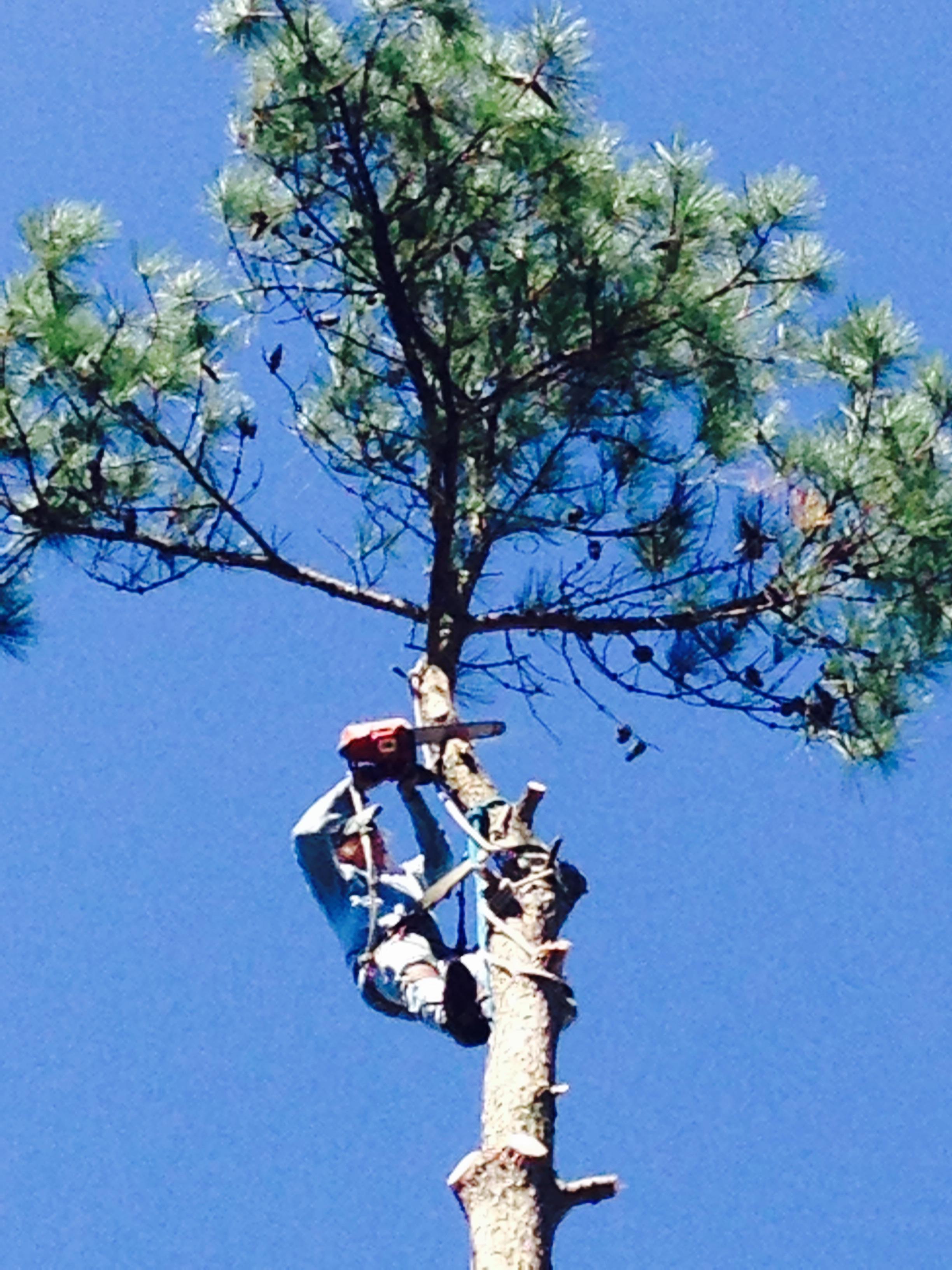 Tree Trimming Service Augusta GA Bill Harley Company