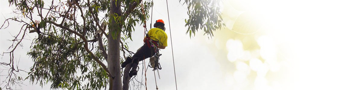 all about tree services men cutting tree