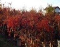 arbusti per siepe