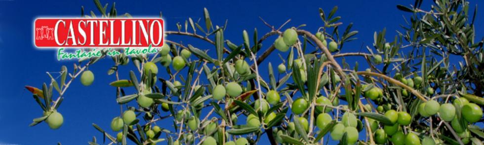 Olive olio extra vergine