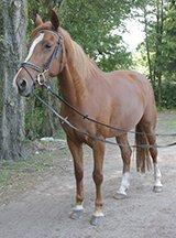 E-pony of klein paard