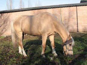 manege pony Amigo is een vriend