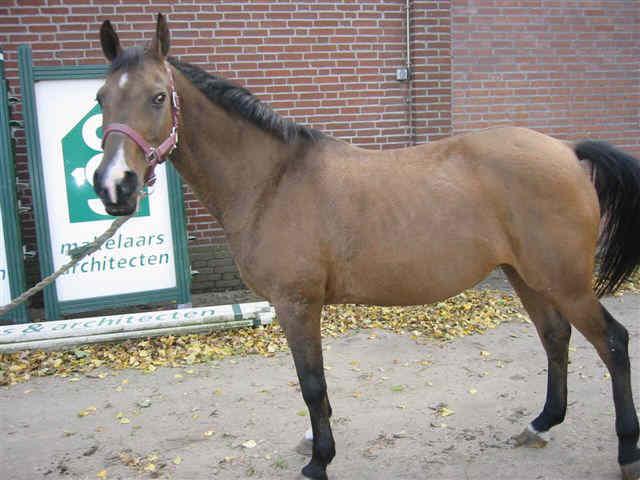 moeilijk doorzitten manege pony