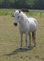 weidegang voor pony's