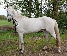 Pony Esmee is een mooie witte merrie