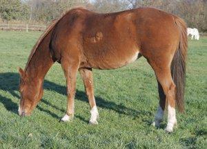 manege pony Lawina rijdt voorop