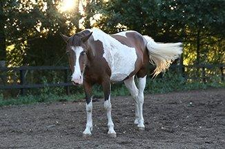 Manege pony met maanogen
