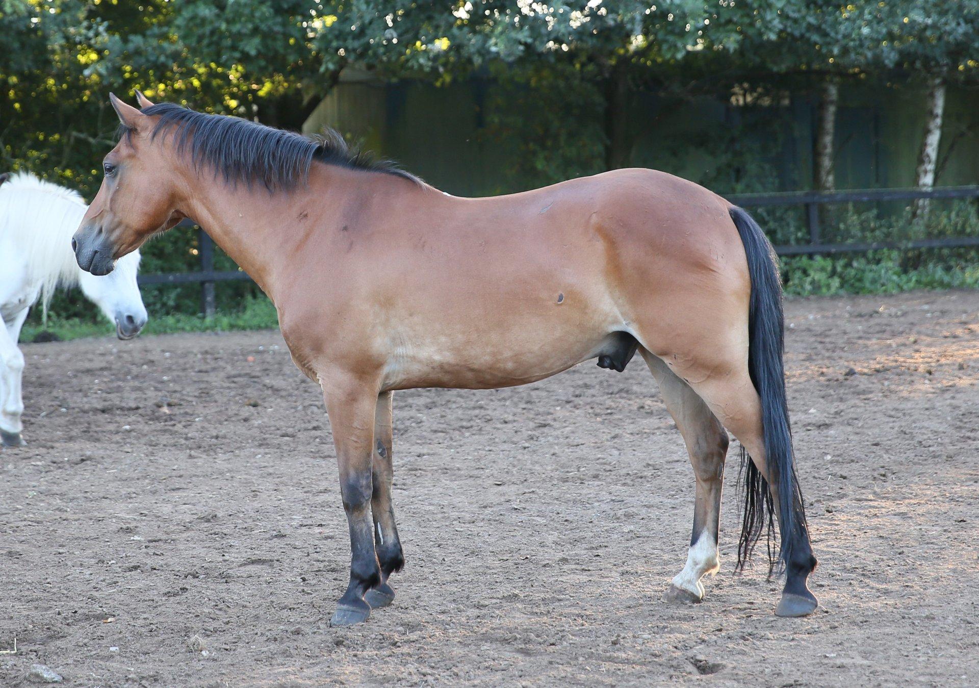 Manege pony Merwin op de driehoek