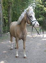 Manege pony Palermo