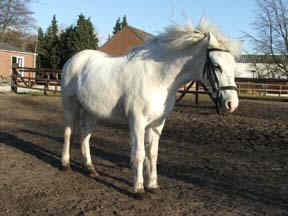 A-pony stokmaat