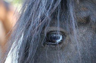 Manege pony Tinker