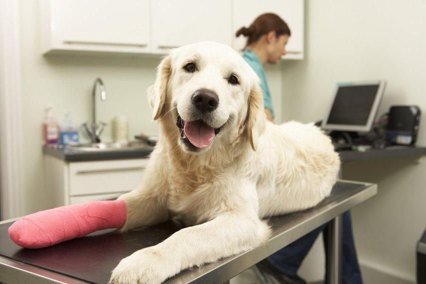 dog getting treated