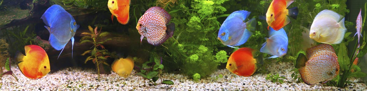 all about fish amphibians and reptiles multi colored cichlids