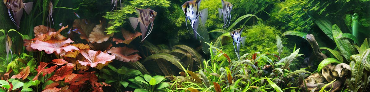 all about fish amphibians and reptiles plants for fish tank