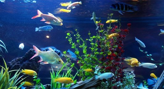 all about fish amphibians and reptiles fish under water