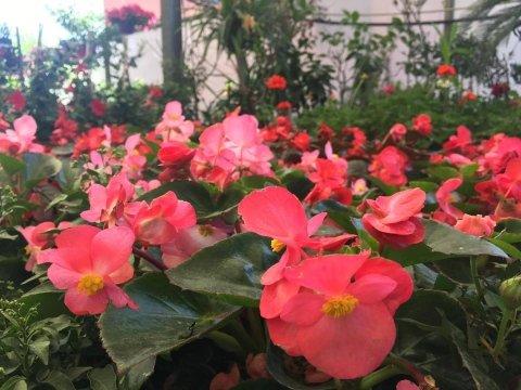 composizioni floreali roma