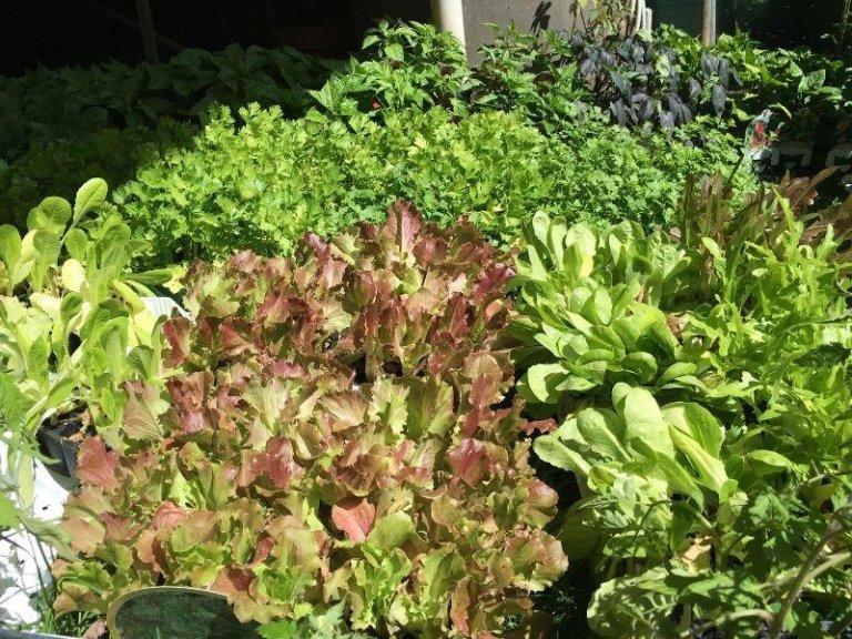 piante da esterni