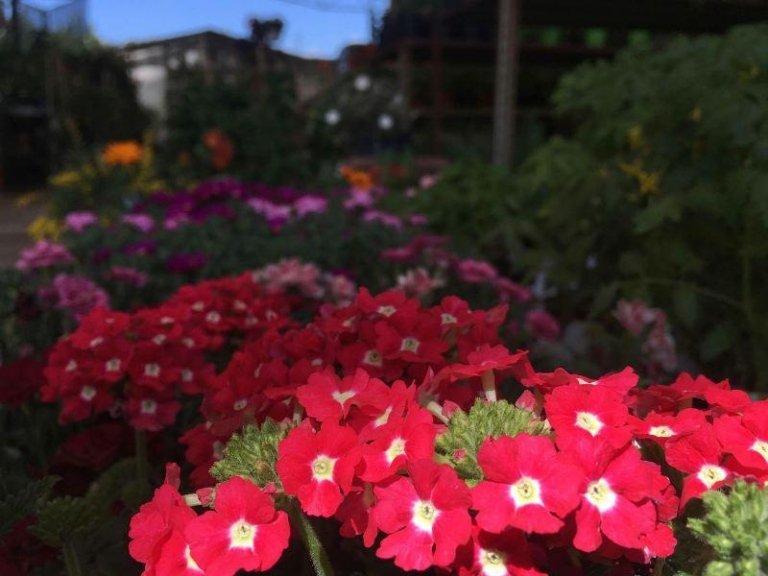 piante ornamentali per esterno