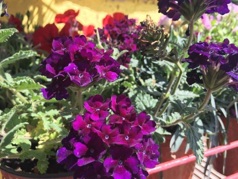 terriccio per piante verdi
