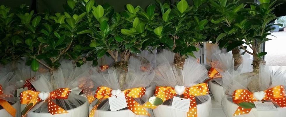bonsai come bomboniera